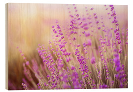 Wood  blooming lavender