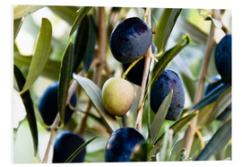 Forex  Olives on branch