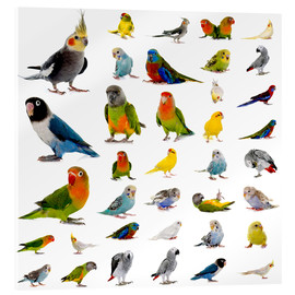 Acrylic glass  Parrots and parakeets