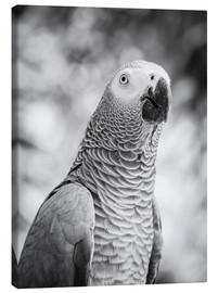 Canvas  African grey Parrot in gray