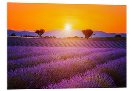 Foam board print  Sun over lavender