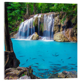 Acrylic print  Fish in front of waterfall