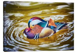Canvas print  Mandarin duck splashing
