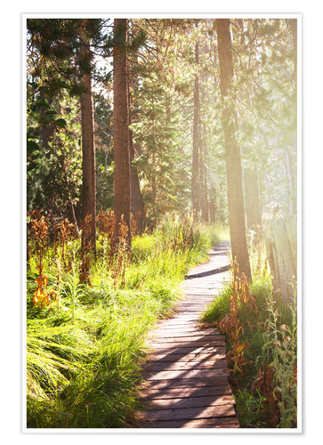 Premium poster Path through the forest
