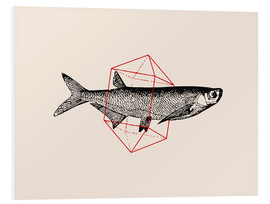 Foam board print  Fish In Geometrics II - Florent Bodart