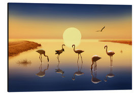 Aluminium print  Flamingos in the evening sun - Monika Jüngling
