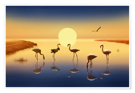 Poster Flamingos in the evening sun