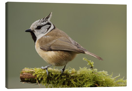 Canvas  Crested Tit in Moos - Uwe Fuchs