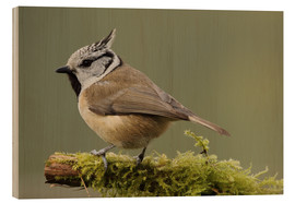 Wood print  Crested Tit in Moos - Uwe Fuchs