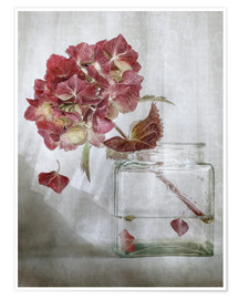 Premium poster Still life with Hydrangea