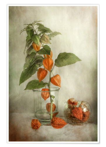 Premium poster Still life with Physalis