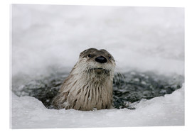 Acrylic glass  Otter from the ice - Ronald Wittek