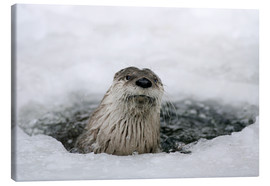Canvas print  Otter from the ice - Ronald Wittek