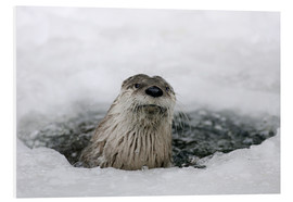 Forex  Otter from the ice - Ronald Wittek