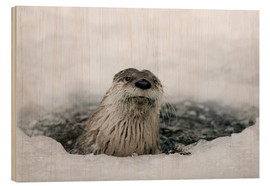 Wood print  Otter from the ice - Ronald Wittek