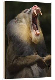 Wood  Mandrill with open mouth - Andreas Keil
