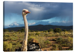 Canvas print  African ostrich - Catharina Lux