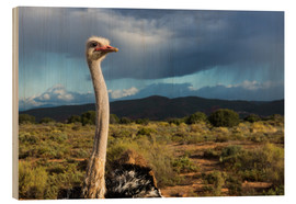 Wood print  African ostrich - Catharina Lux