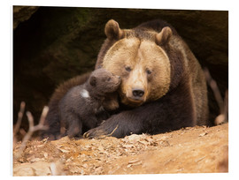 Foam board print  Brown bear with young bear - Dieter Meyrl