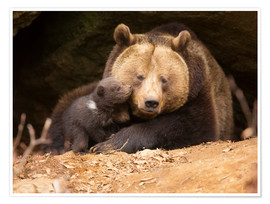 Premium poster Brown bear with young bear