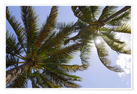 Premium poster  Palm trees in Lummus Park - Axel Schmies