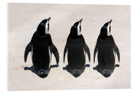 Acrylic glass  Three African penguins - Catharina Lux