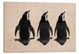 Wood print  Three African penguins - Catharina Lux