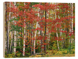 Wood print  Autumnal deciduous forest - Thonig