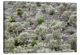 Steffen Beuthan - Olive grove in Mallorca