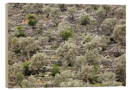 Wood print  Olive grove in Mallorca - Steffen Beuthan