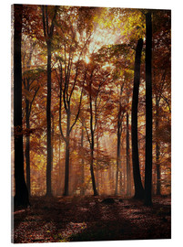 Acrylic print  Light incidence in the autumn beech forest - Thonig