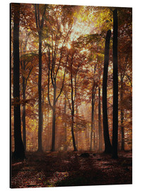 Aluminium print  Light incidence in the autumn beech forest - Thonig
