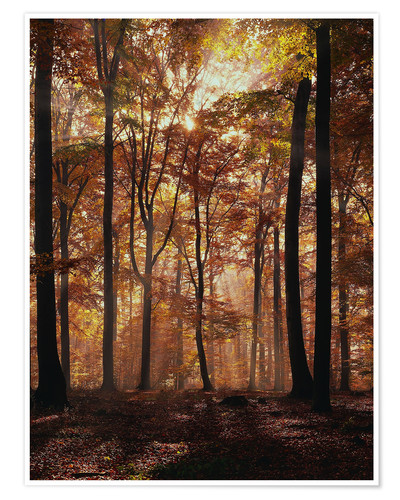Premium poster Light incidence in the autumn beech forest