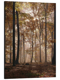 Thonig - Light incident and forest floor in the beech forest