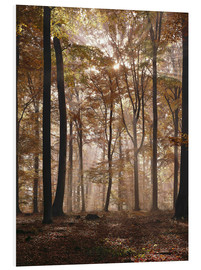 Foam board print  Light incident and forest floor in the beech forest - Thonig