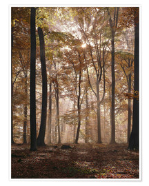 Premium poster Light incident and forest floor in the beech forest