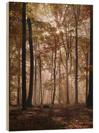 Wood print  Light incident and forest floor in the beech forest - Thonig
