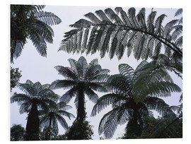 Forex  A roof of tree ferns - Thonig