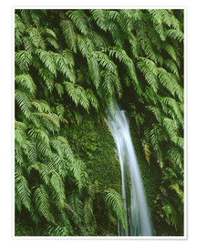 Premium poster Ferns at a waterfall