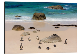 Aluminium print  Penguin colony - Catharina Lux