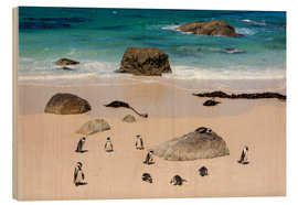 Wood print  Penguin colony - Catharina Lux