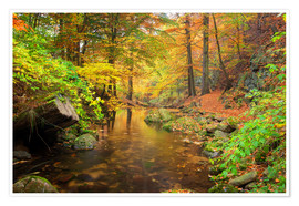 Premium poster Little brook in autumn forest