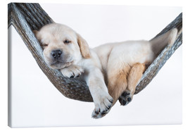 Canvas  Labrador puppy in hammock - Beate Margraf