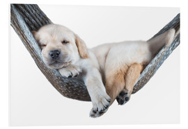 Forex  Labrador puppy in hammock - Beate Margraf