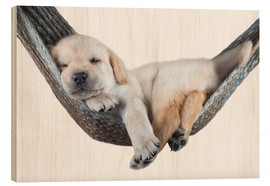 Wood print  Labrador puppy in hammock - Beate Margraf