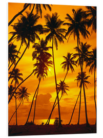 Foam board print  Palm trees in the sunset - Thonig