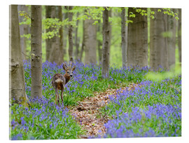 Acrylic print  Deer in a beech forest - Andreas Keil