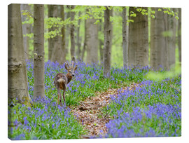 Canvas print  Deer in a beech forest - Andreas Keil