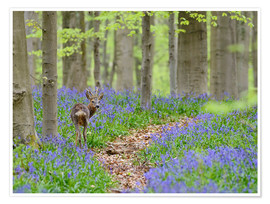 Premium poster Deer in a beech forest