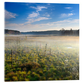 Acrylic print  Müritz National Park, Great Serrahnmoor - Andreas Vitting